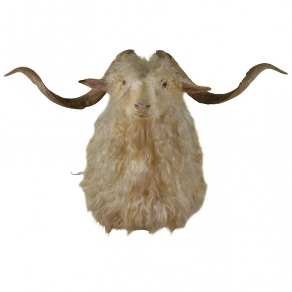 Sheep Shoulder Mount