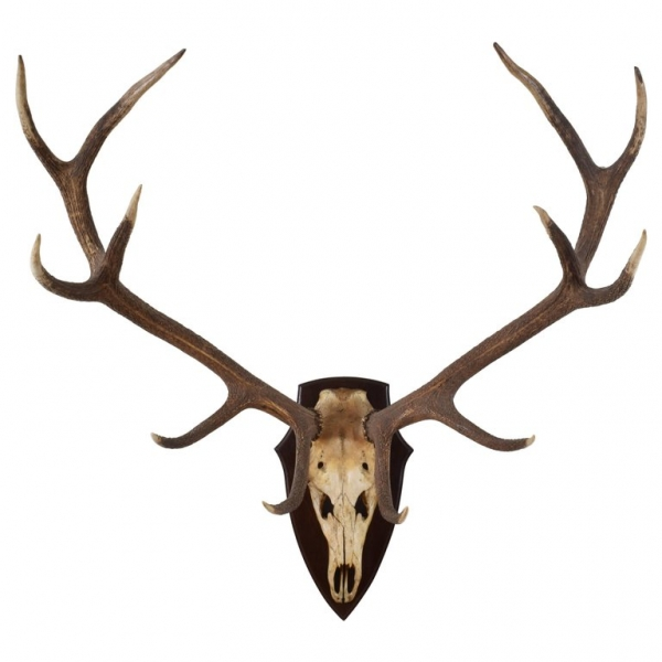 Large Deer Antler Mount